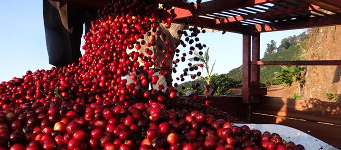 コスタリカ ヒラソーレス農園のイメージ写真1