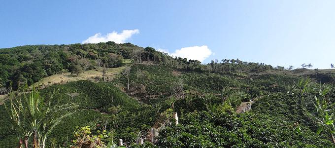コスタリカ ヒラソーレス農園のイメージ写真2