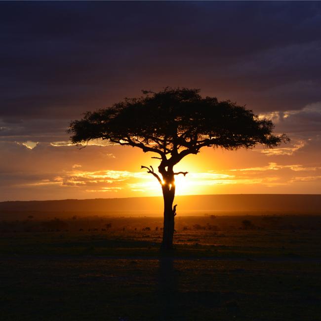 アフリカを巡る